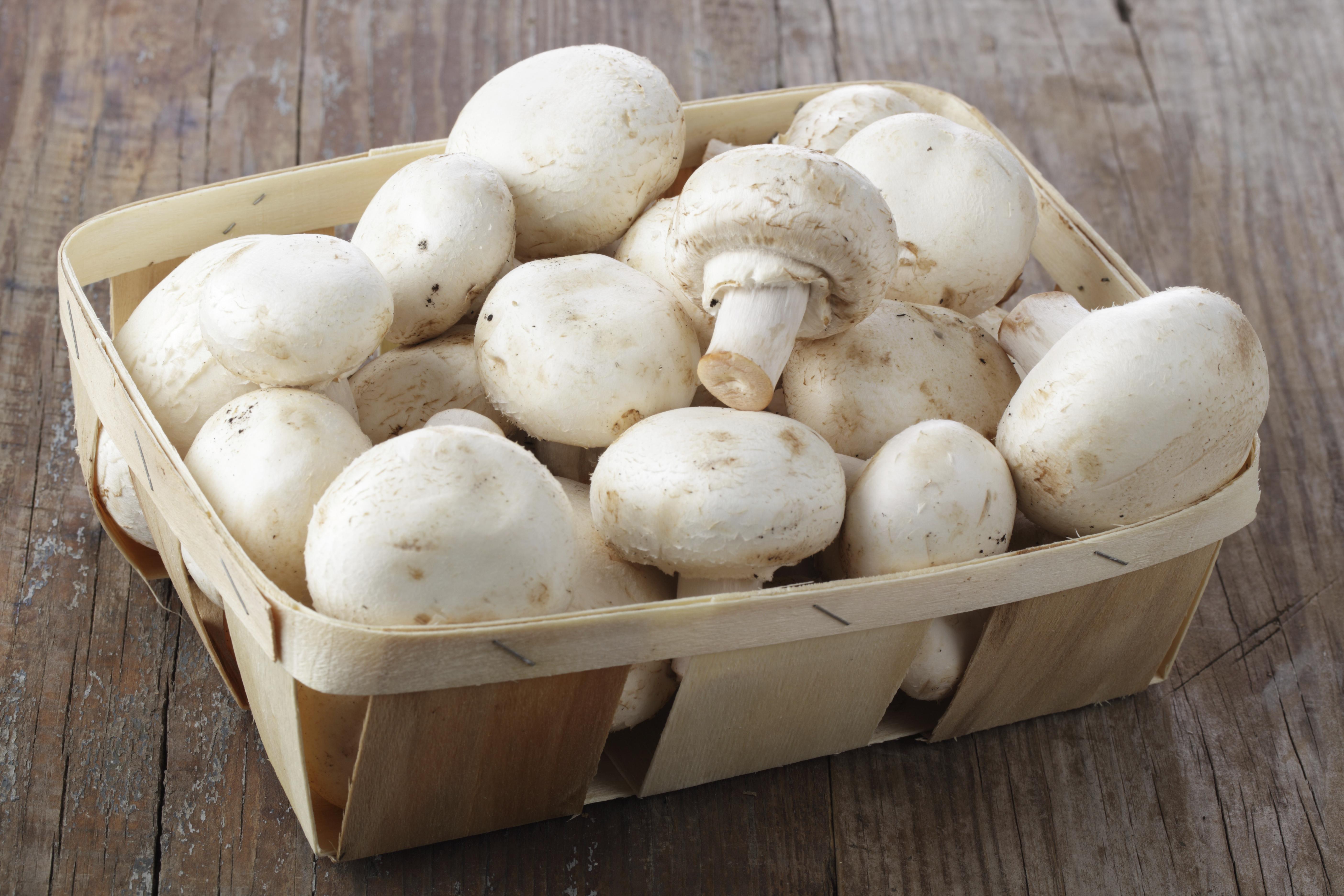 ehető gombák